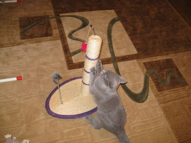 Купить Котов и кошек тильд в интернет магазине на Ярмарке 93