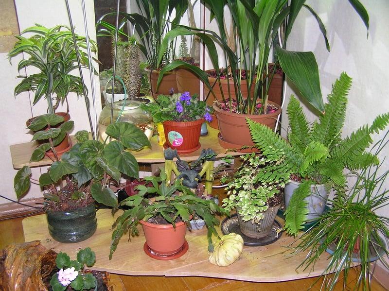 Зимний сад в квартире своими руками фото 48