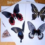 Картинки бабочек