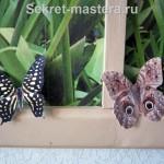 Бабочки на фотообоях