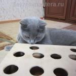 Игрушка для котов, кошек или котяты