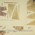 4 листа костей