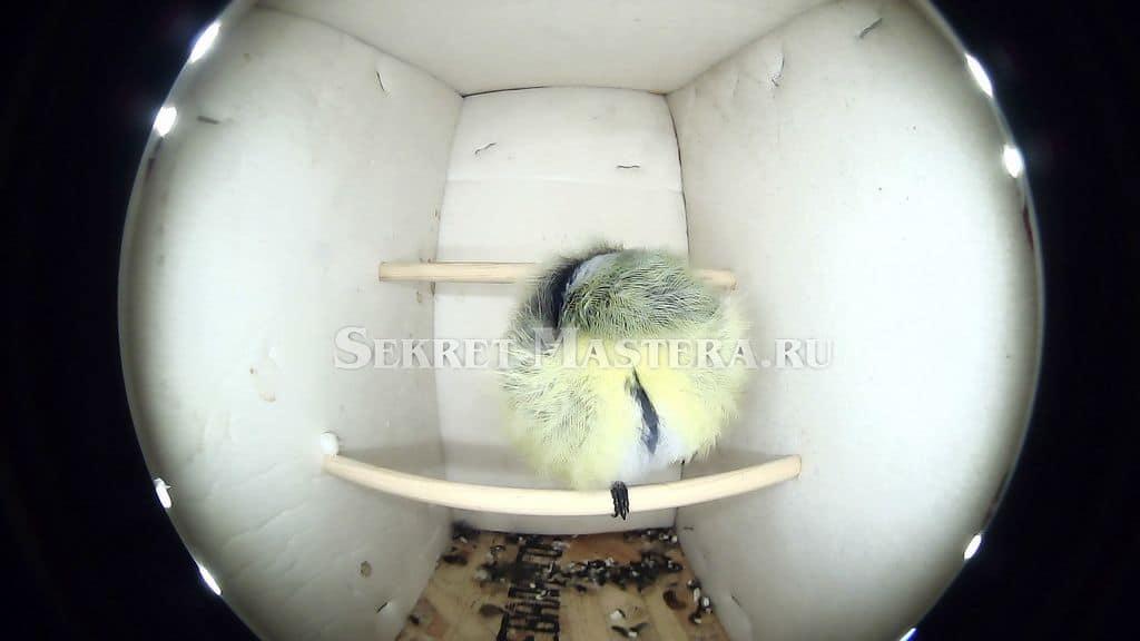 """Проект """"Убежище для птиц"""""""